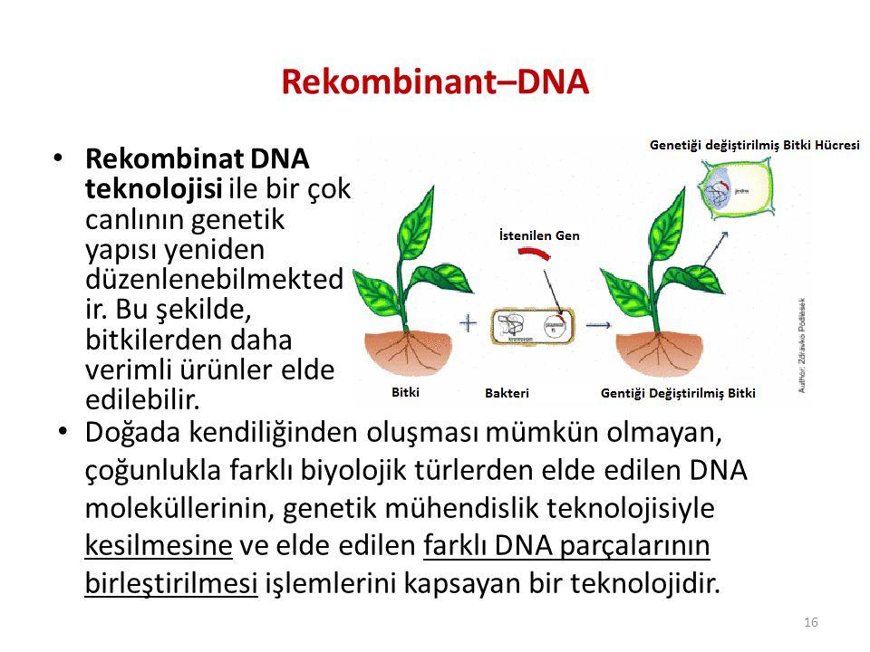 Rekombinant–DNA