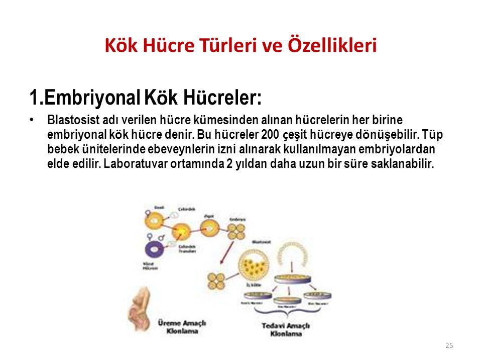 Kök Hücre Türleri ve Özellikleri