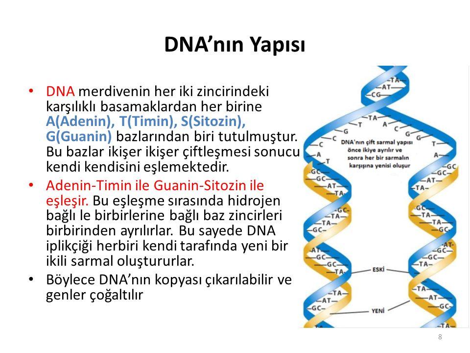 DNA'nın Yapısı