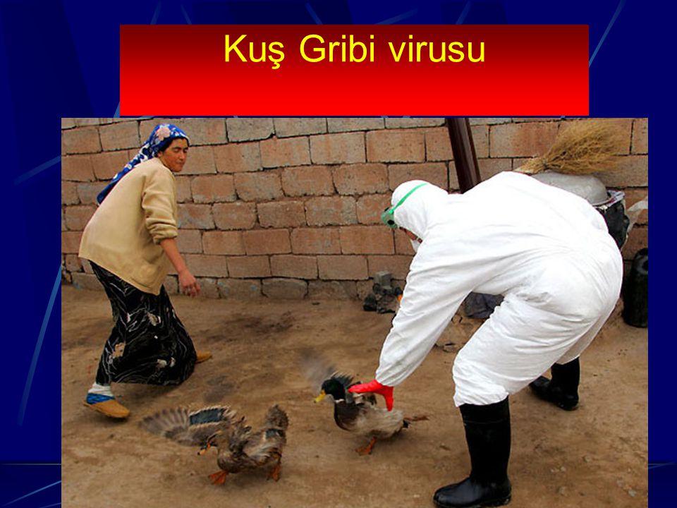 Kuş Gribi virusu Virus ilk olarak 1878 yılında izole edilmiştir.