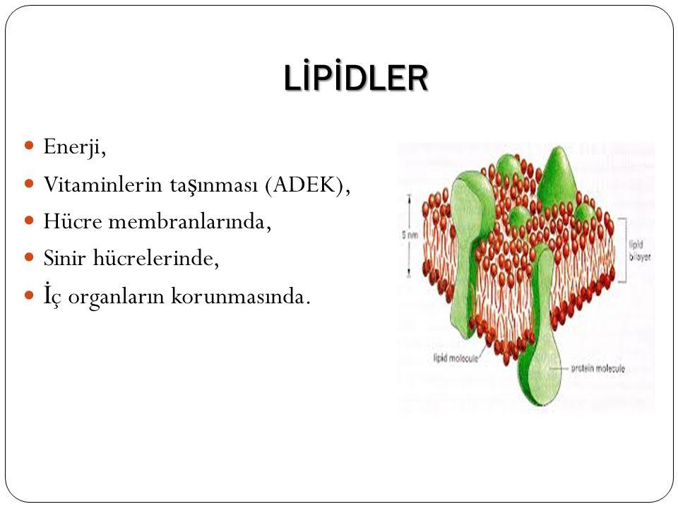 LİPİDLER Enerji, Vitaminlerin taşınması (ADEK), Hücre membranlarında,