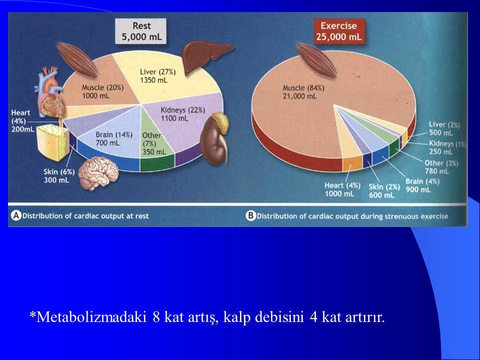 *Metabolizmadaki 8 kat artış, kalp debisini 4 kat artırır.