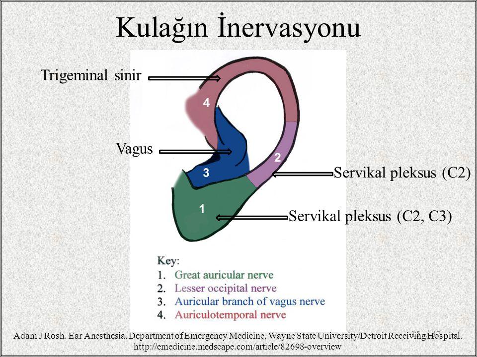 Kulağın İnervasyonu Trigeminal sinir Vagus Servikal pleksus (C2)