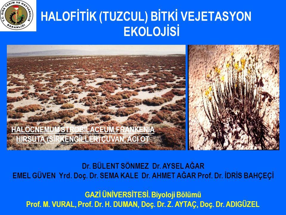 HALOFİTİK (TUZCUL) BİTKİ VEJETASYON EKOLOJİSİ