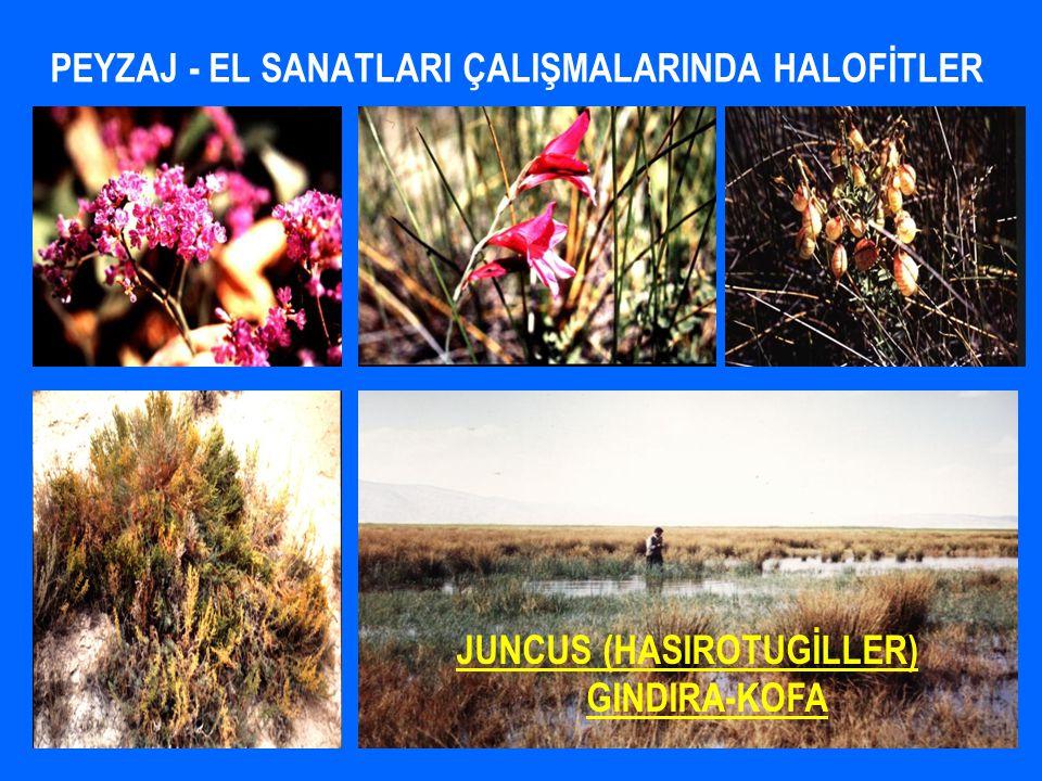 PEYZAJ - EL SANATLARI ÇALIŞMALARINDA HALOFİTLER