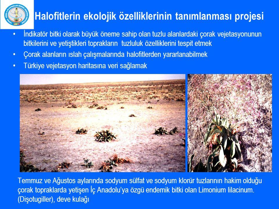 Halofitlerin ekolojik özelliklerinin tanımlanması projesi