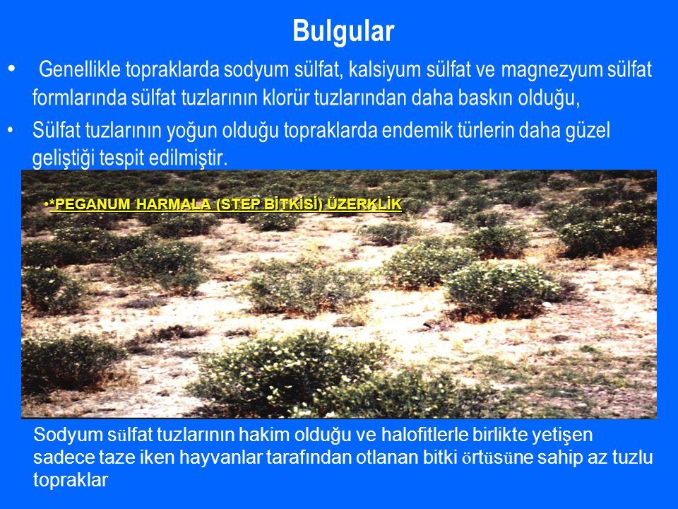Bulgular