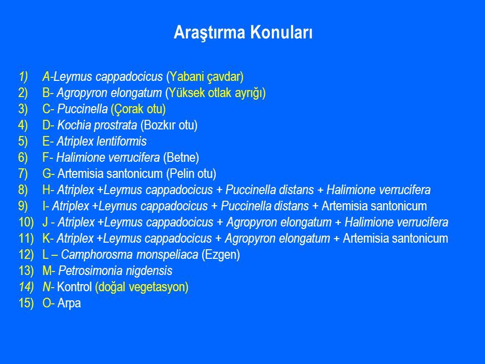 Araştırma Konuları A-Leymus cappadocicus (Yabani çavdar)