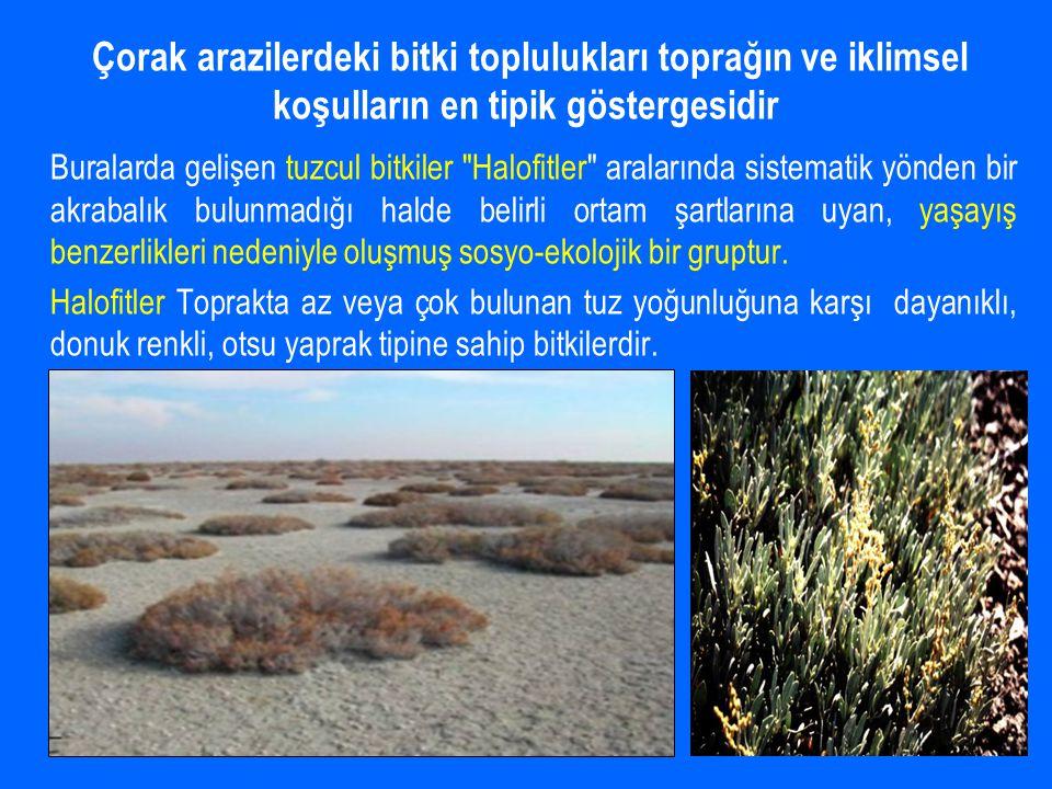 Çorak arazilerdeki bitki toplulukları toprağın ve iklimsel koşulların en tipik göstergesidir