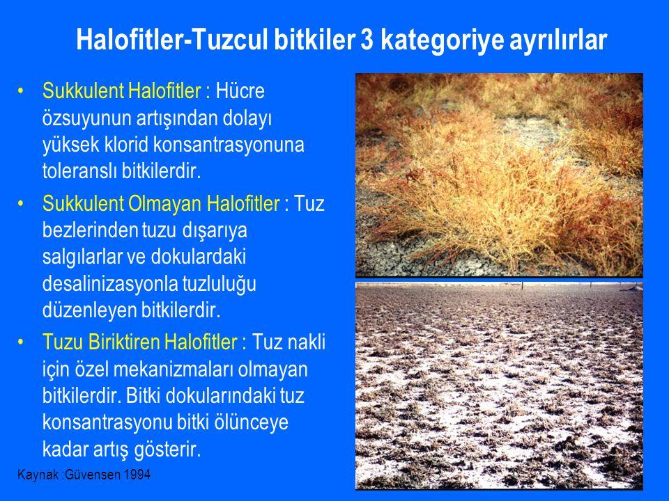 Halofitler-Tuzcul bitkiler 3 kategoriye ayrılırlar