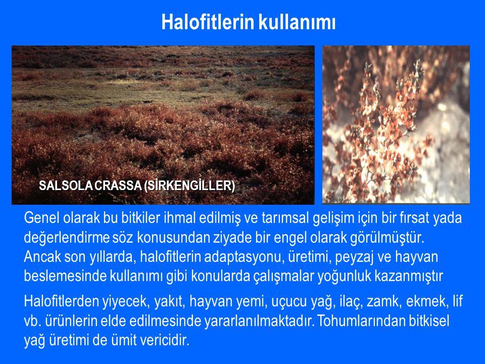 Halofitlerin kullanımı