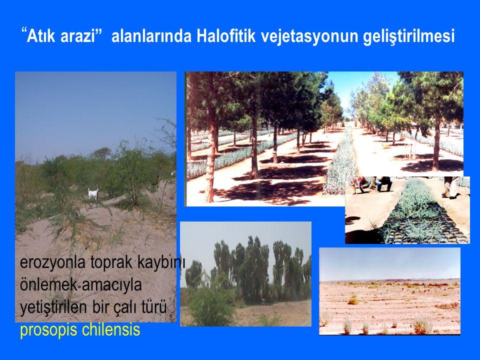 Atık arazi alanlarında Halofitik vejetasyonun geliştirilmesi