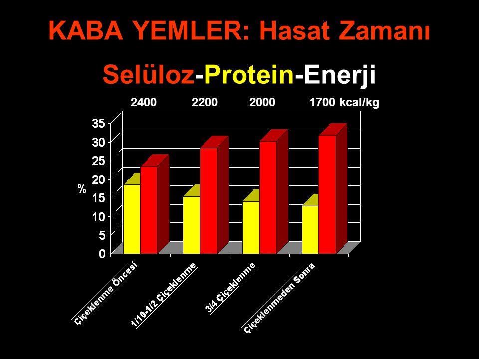 KABA YEMLER: Hasat Zamanı Selüloz-Protein-Enerji