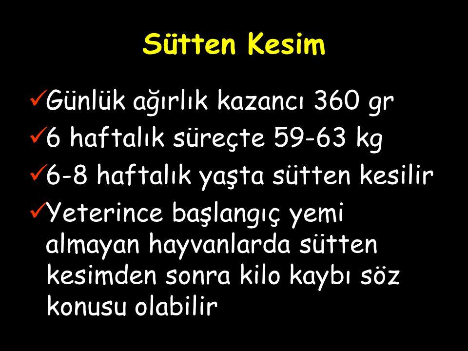 Sütten Kesim Günlük ağırlık kazancı 360 gr 6 haftalık süreçte 59-63 kg