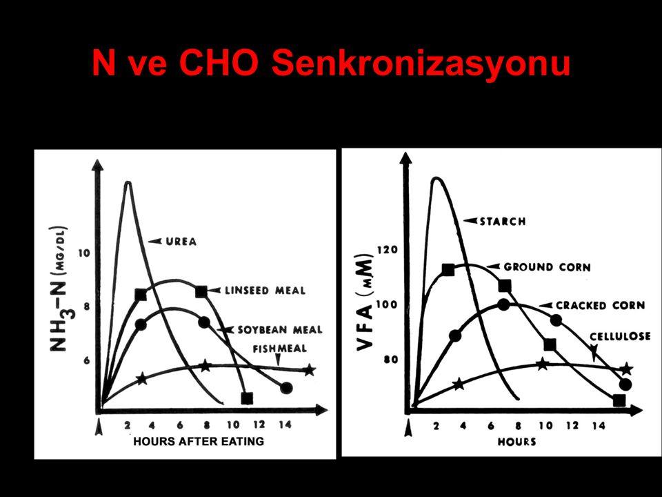 N ve CHO Senkronizasyonu