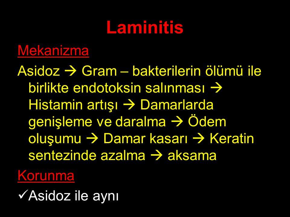 Laminitis Mekanizma.
