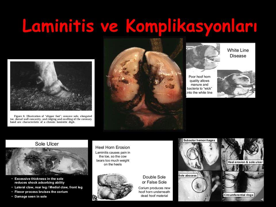Laminitis ve Komplikasyonları