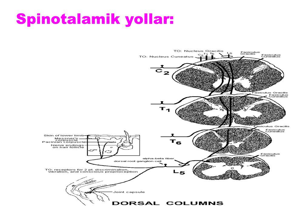 Spinotalamik yollar: