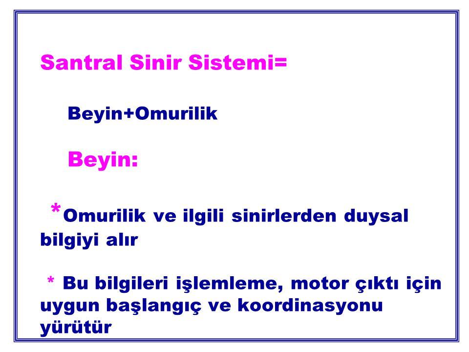 Santral Sinir Sistemi=. Beyin+Omurilik. Beyin: