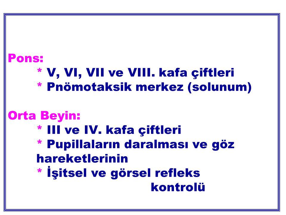 Pons:. V, VI, VII ve VIII. kafa çiftleri