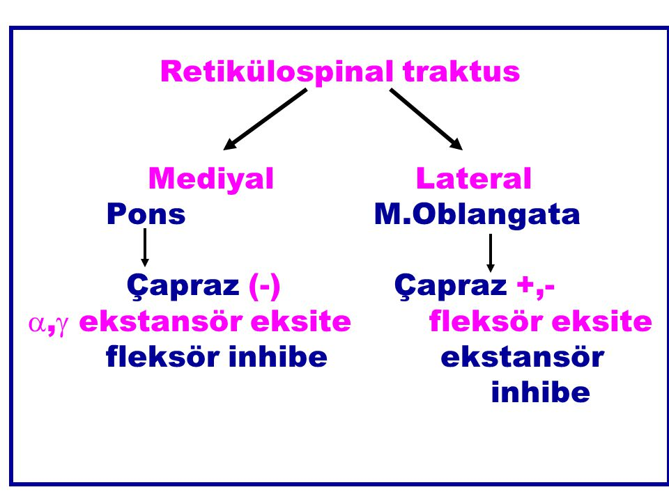 Retikülospinal traktus Mediyal Lateral Pons M.Oblangata Çapraz (-) Çapraz +,- , ekstansör eksite fleksör eksite fleksör inhibe ekstansör inhibe