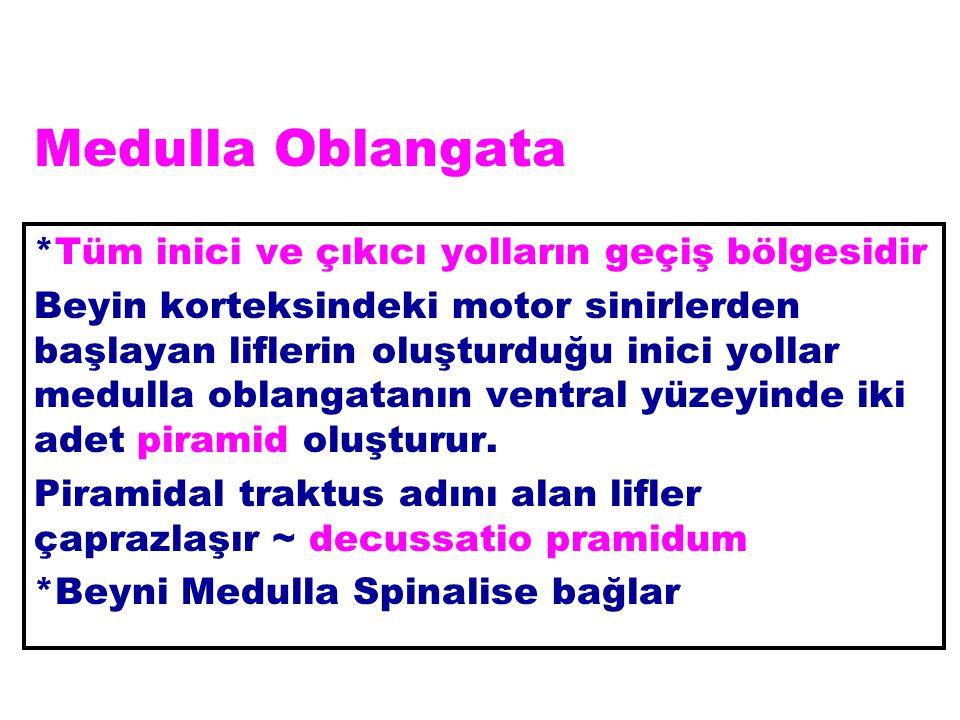 Medulla Oblangata *Tüm inici ve çıkıcı yolların geçiş bölgesidir