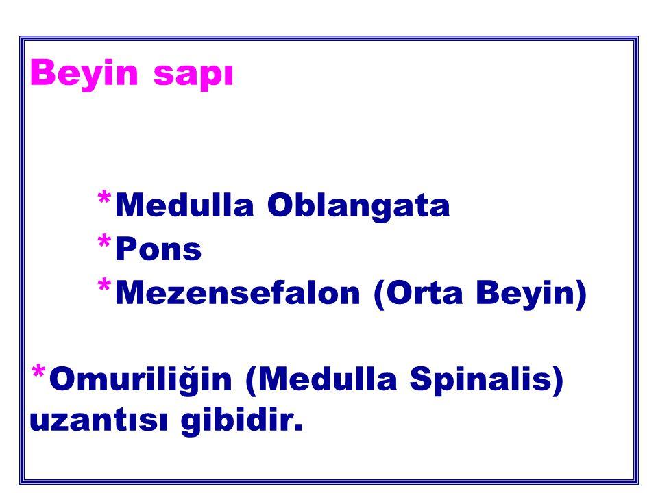 Beyin sapı. Medulla Oblangata. Pons. Mezensefalon (Orta Beyin)
