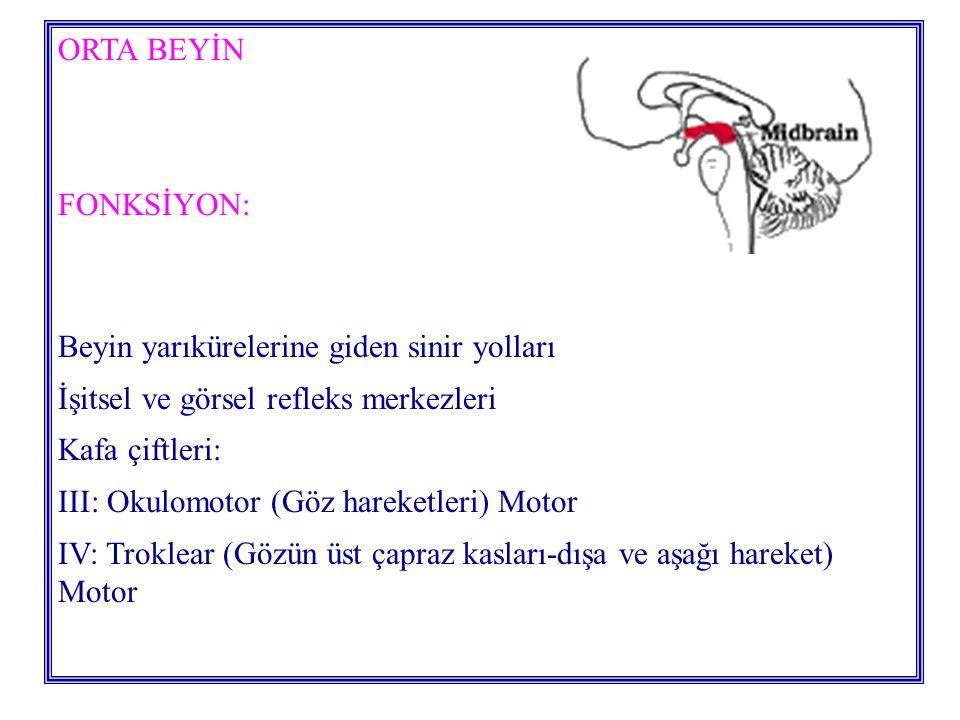 ORTA BEYİN FONKSİYON: Beyin yarıkürelerine giden sinir yolları. İşitsel ve görsel refleks merkezleri.