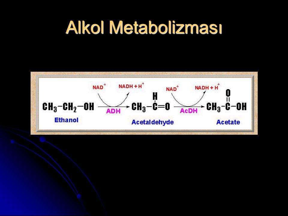 Alkol Metabolizması