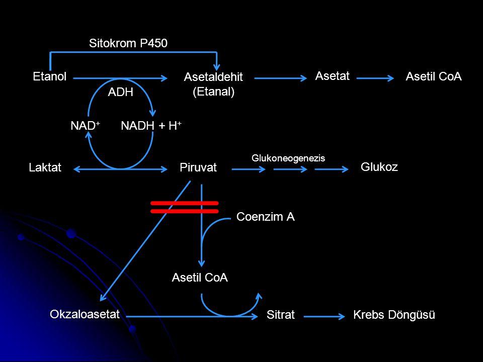 Sitokrom P450 Etanol Asetaldehit (Etanal) Asetat Asetil CoA ADH NAD+