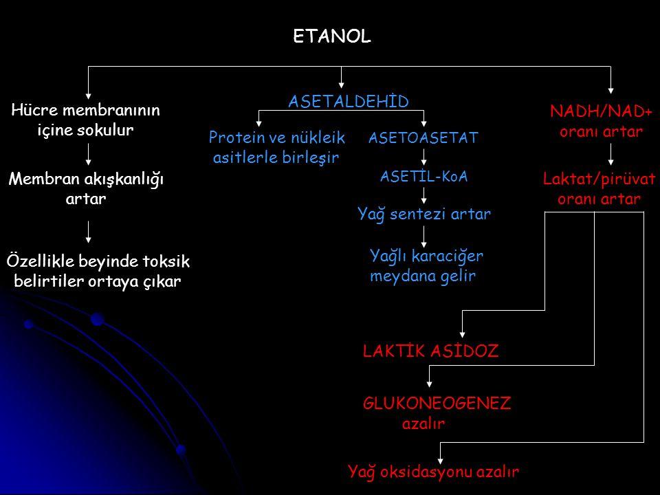 ETANOL ASETALDEHİD Hücre membranının içine sokulur NADH/NAD+