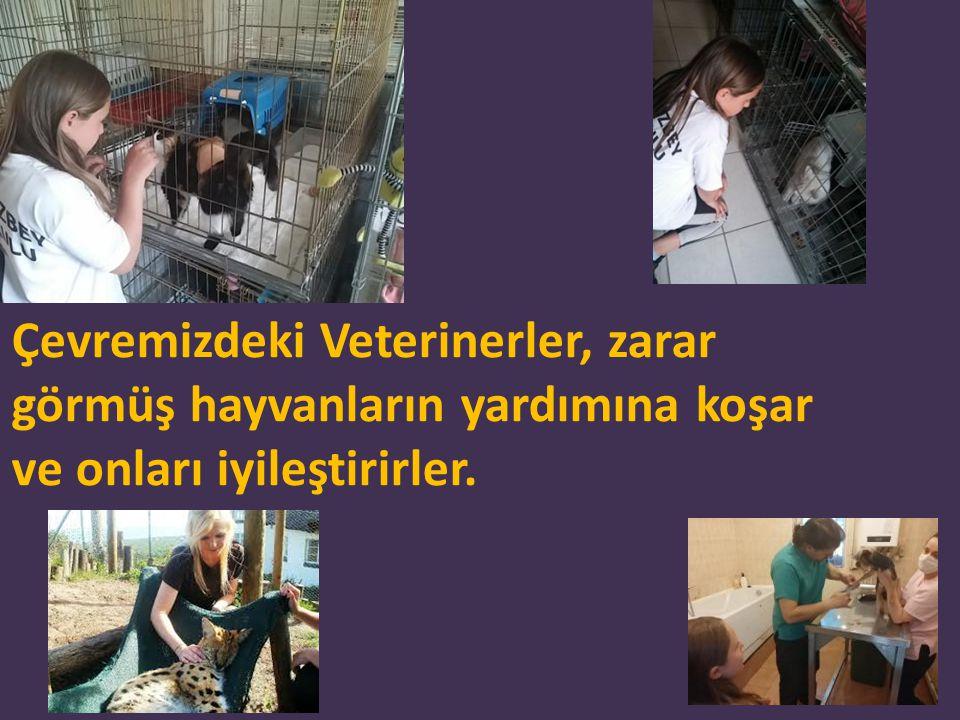 Çevremizdeki Veterinerler, zarar görmüş hayvanların yardımına koşar ve onları iyileştirirler.