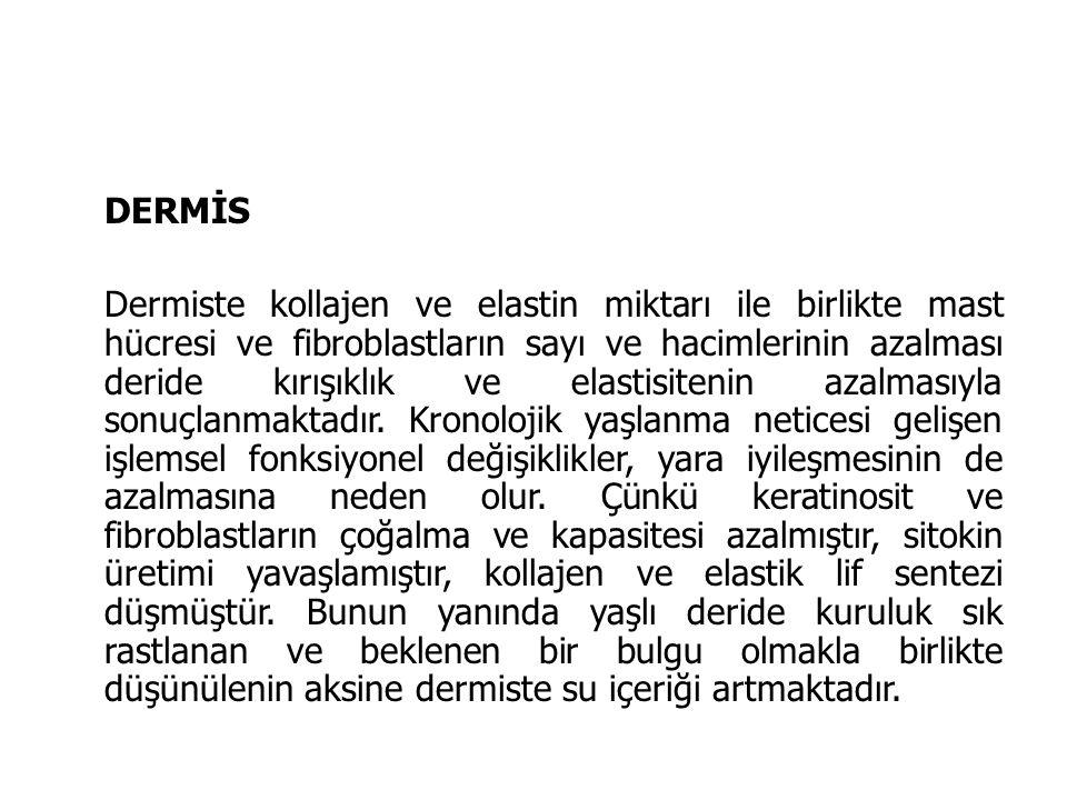 DERMİS