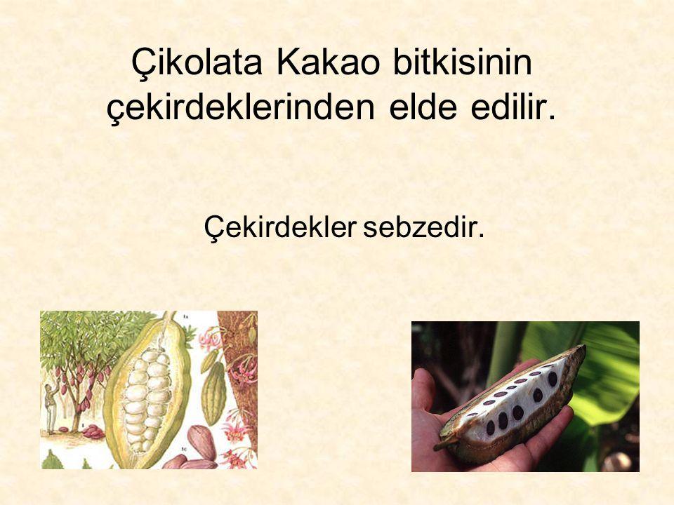 Çikolata Kakao bitkisinin çekirdeklerinden elde edilir.