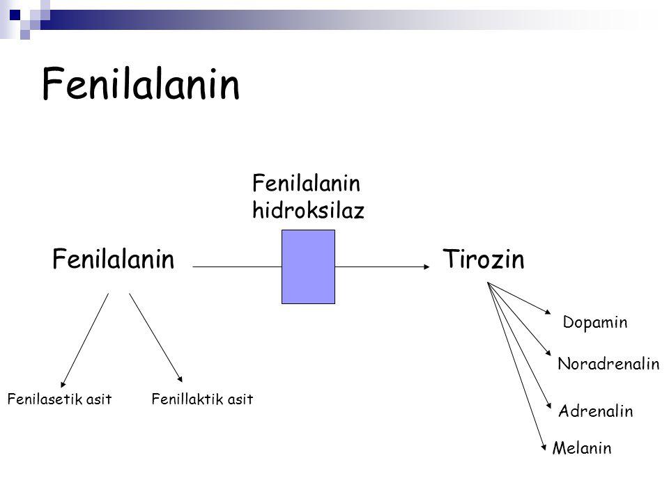 Fenilalanin Fenilalanin Tirozin Fenilalanin hidroksilaz Dopamin