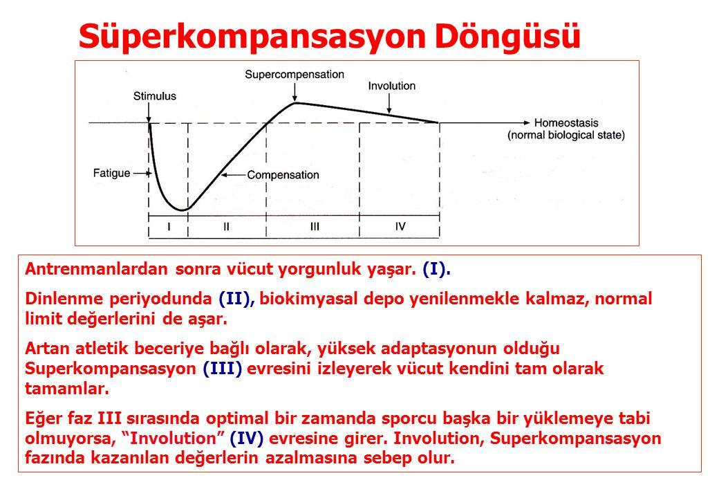 Süperkompansasyon Döngüsü