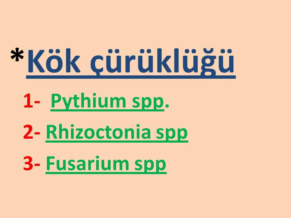 *Kök çürüklüğü 1- Pythium spp. 2- Rhizoctonia spp 3- Fusarium spp