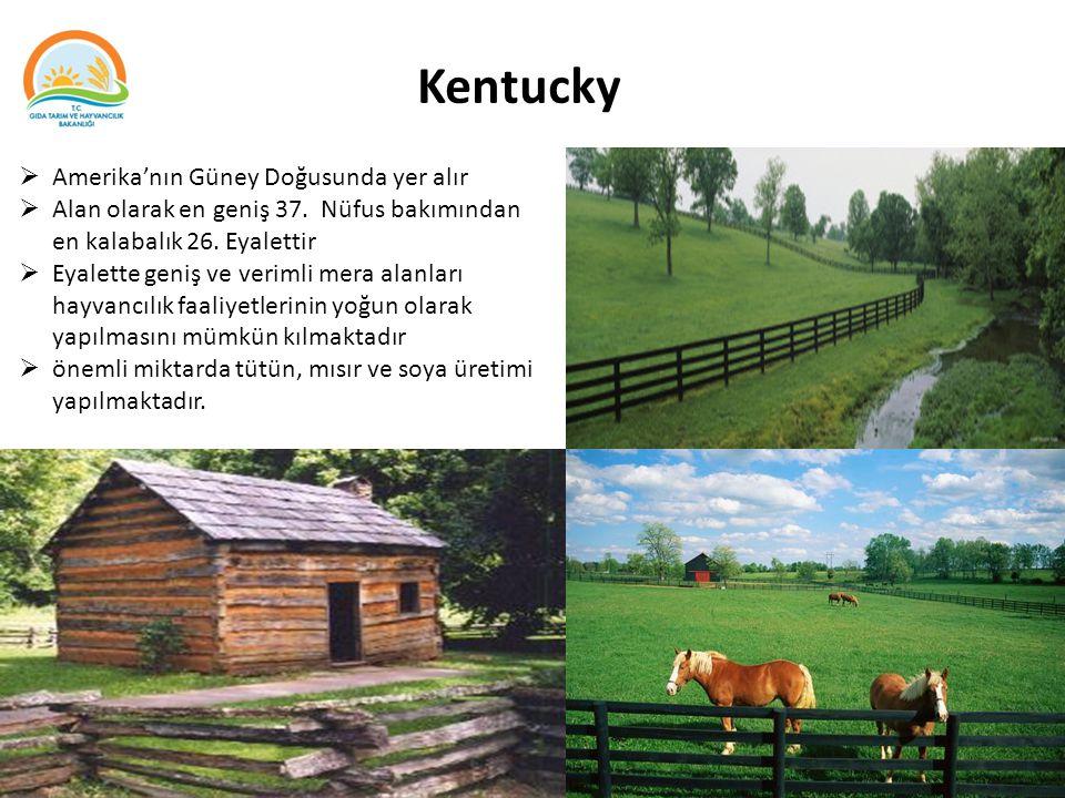 Kentucky Amerika'nın Güney Doğusunda yer alır