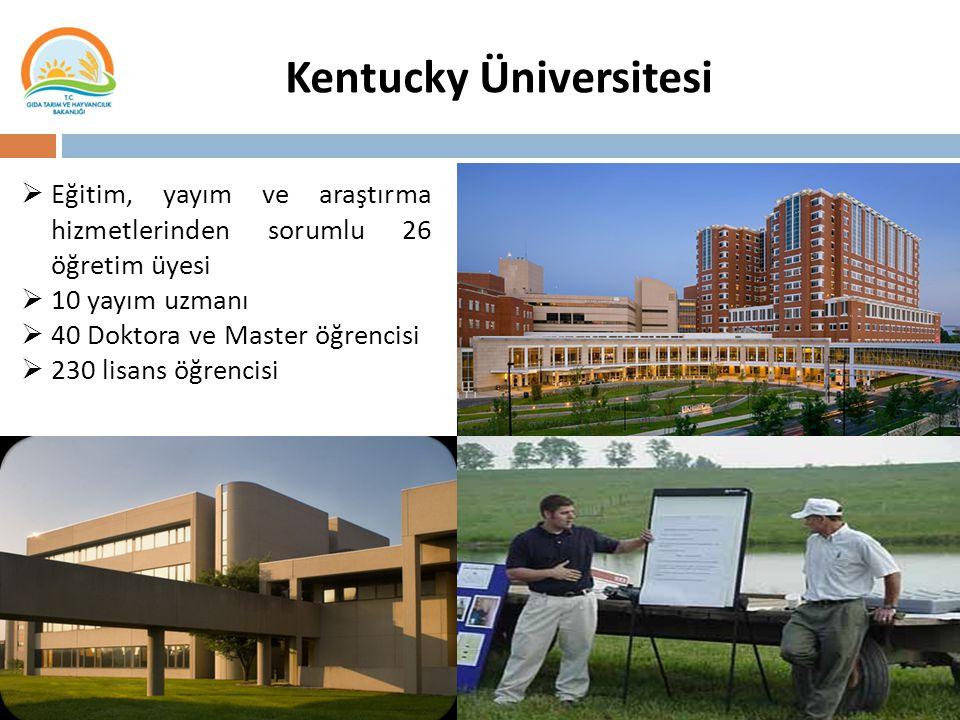 Kentucky Üniversitesi