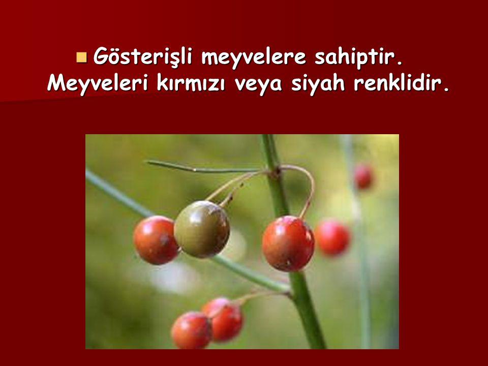 Gösterişli meyvelere sahiptir. Meyveleri kırmızı veya siyah renklidir.
