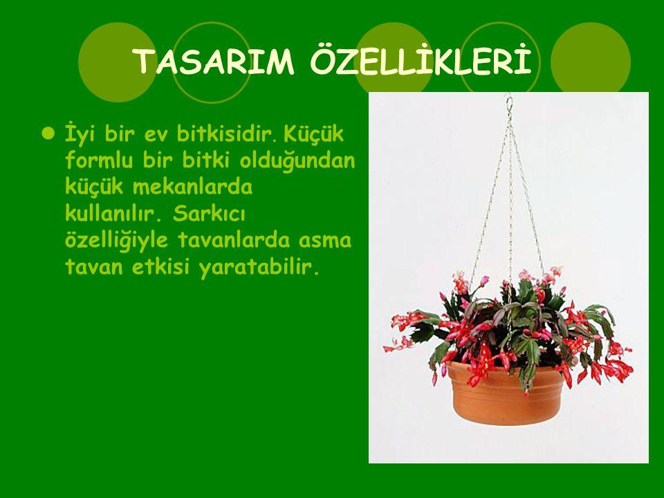 TASARIM ÖZELLİKLERİ