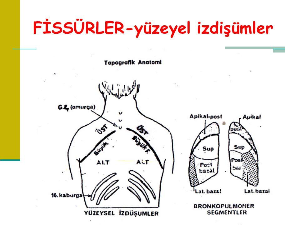 FİSSÜRLER-yüzeyel izdişümler