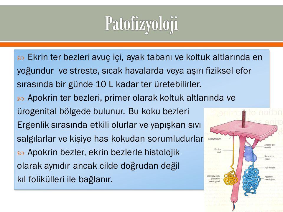 Patofizyoloji Ekrin ter bezleri avuç içi, ayak tabanı ve koltuk altlarında en. yoğundur ve streste, sıcak havalarda veya aşırı fiziksel efor.