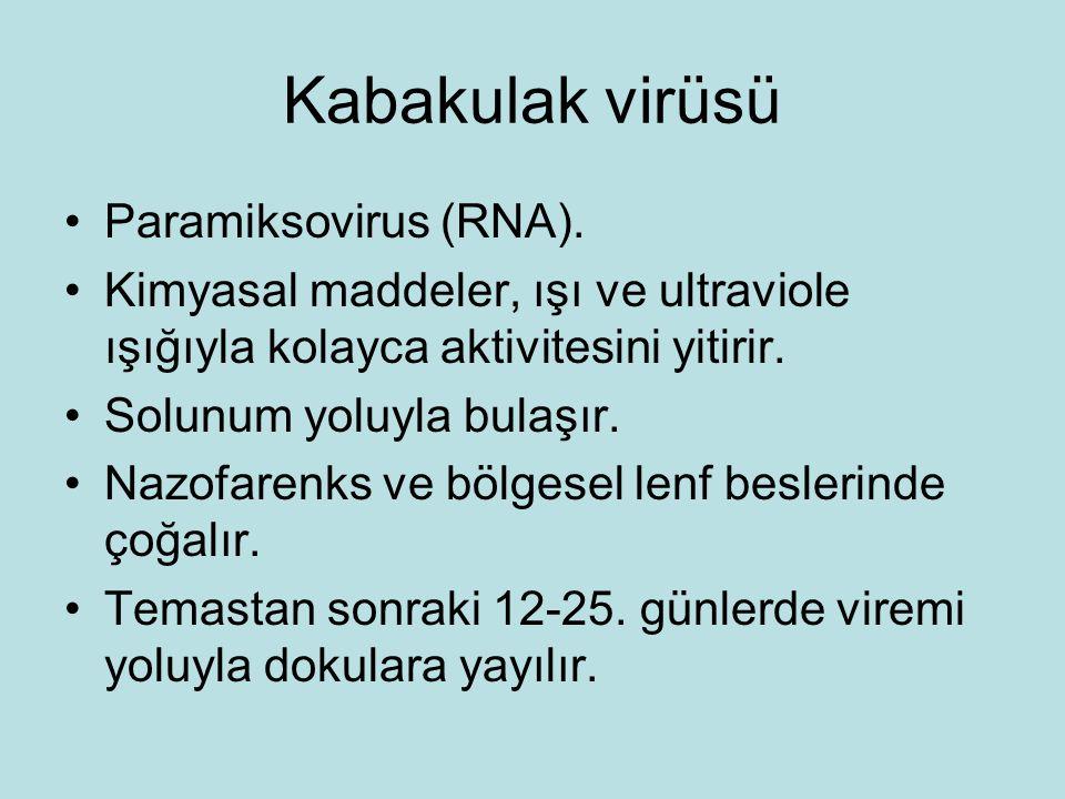 Kabakulak virüsü Paramiksovirus (RNA).