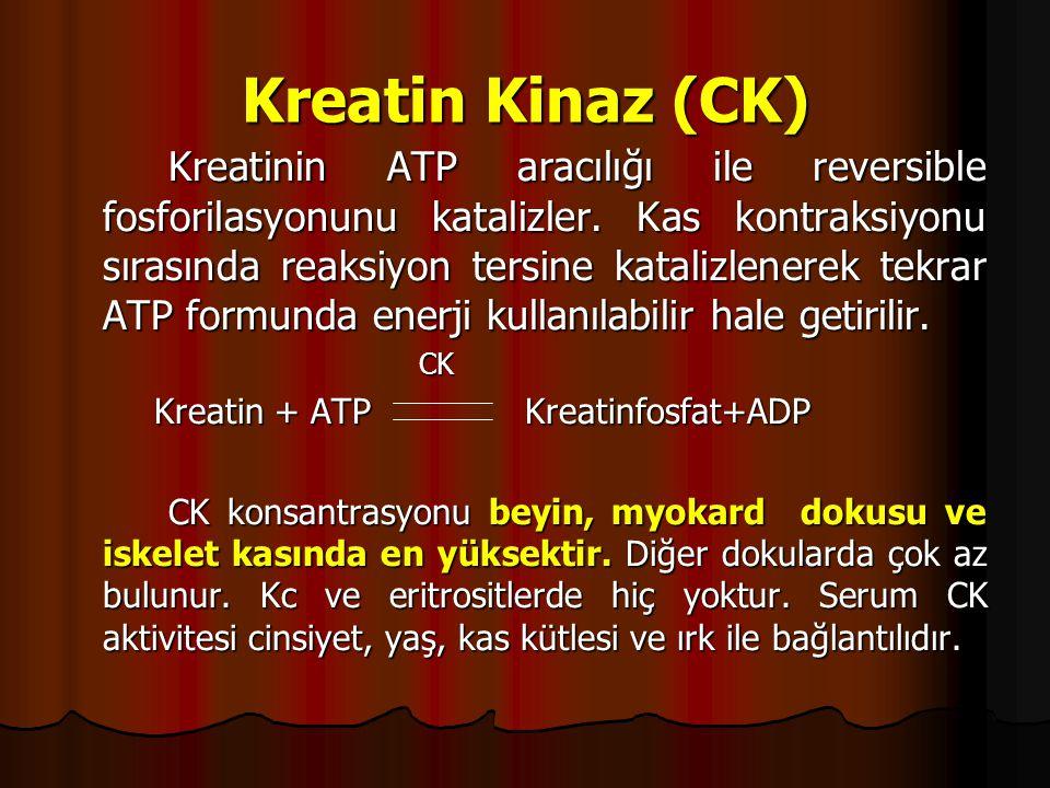 Kreatin Kinaz (CK)