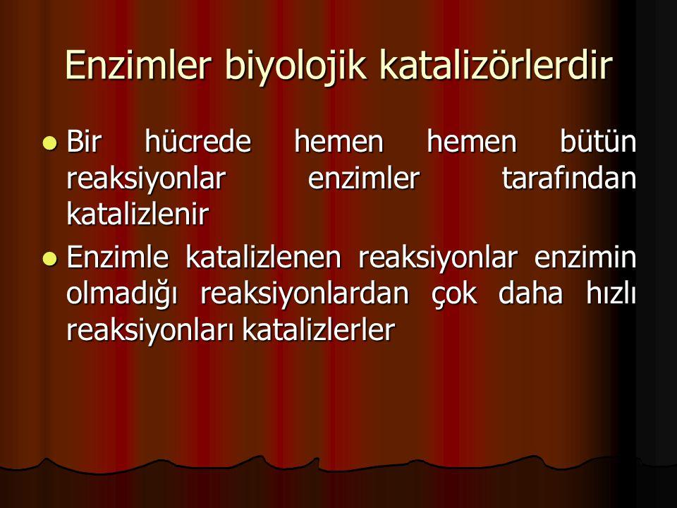 Enzimler biyolojik katalizörlerdir