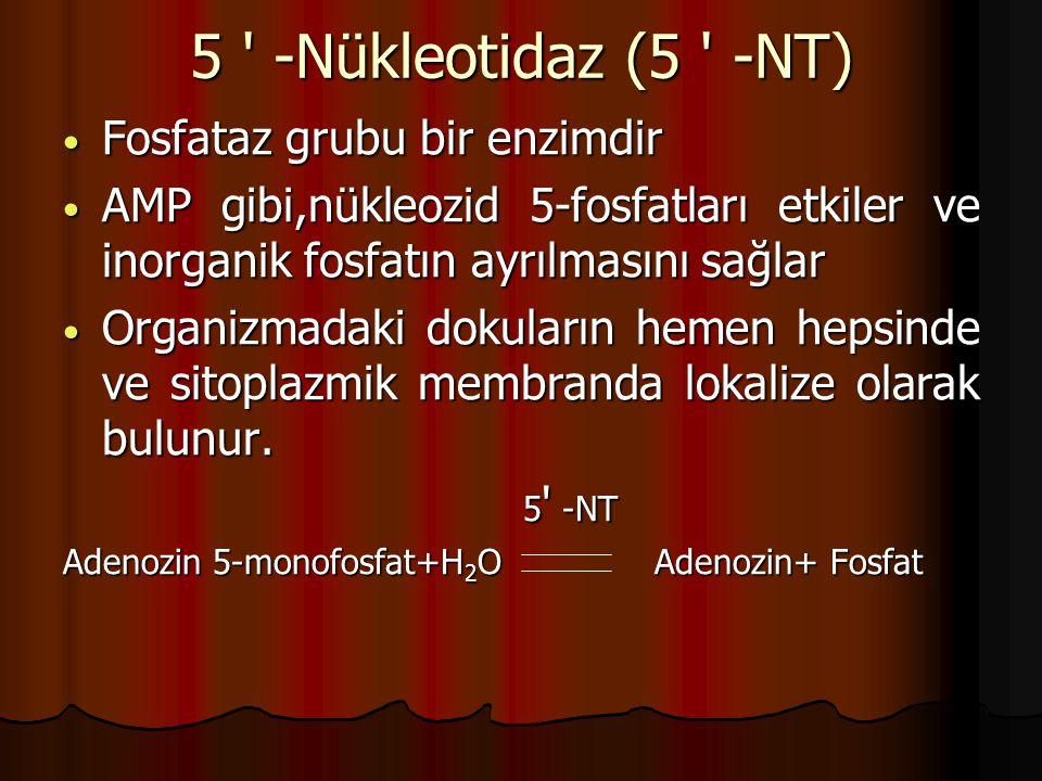 5 -Nükleotidaz (5 -NT) Fosfataz grubu bir enzimdir