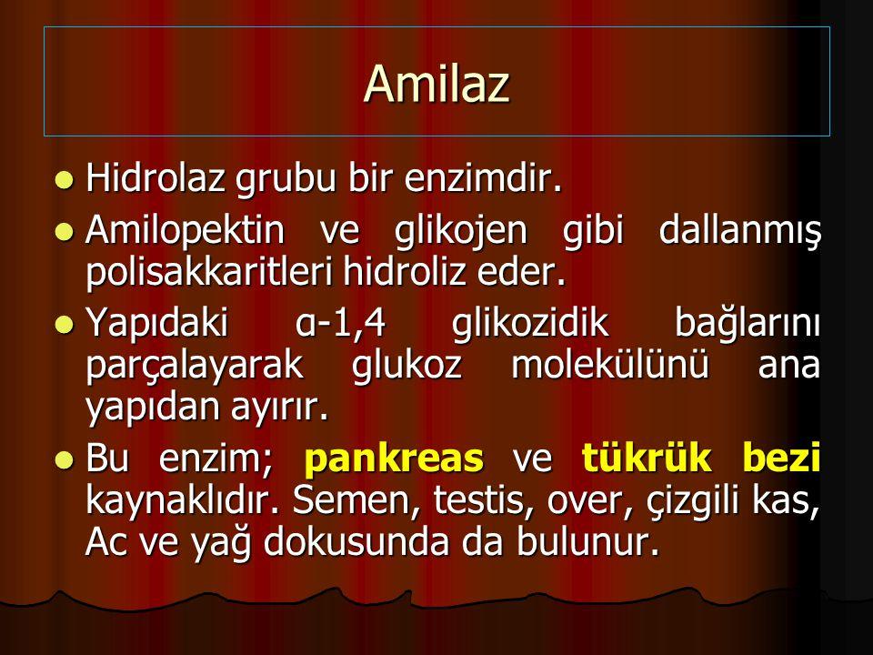 Amilaz Hidrolaz grubu bir enzimdir.