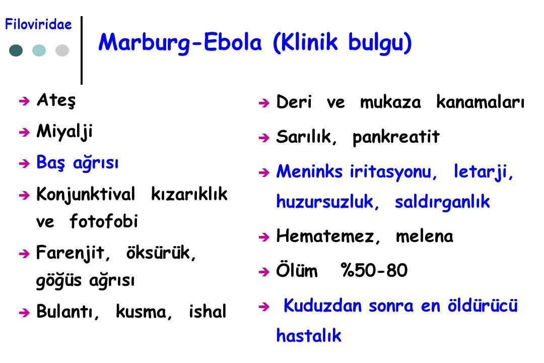Marburg-Ebola (Klinik bulgu)