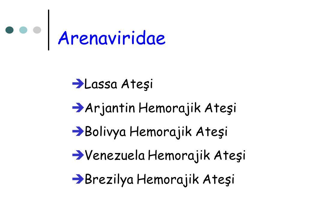 Arenaviridae Lassa Ateşi Arjantin Hemorajik Ateşi